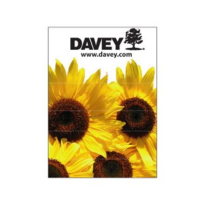 Sunflower Seed Packets (25 Pack)